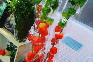 花ごよみDiary −from Instagram